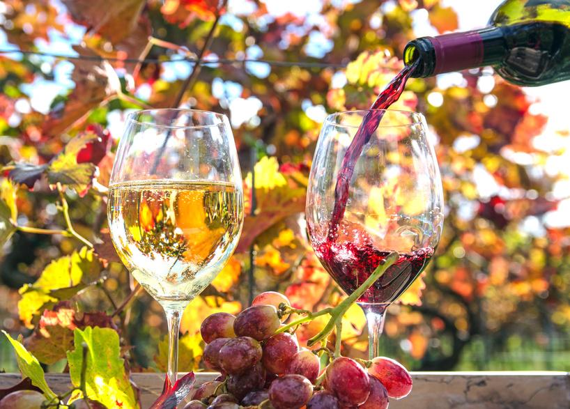 wino blog o winie
