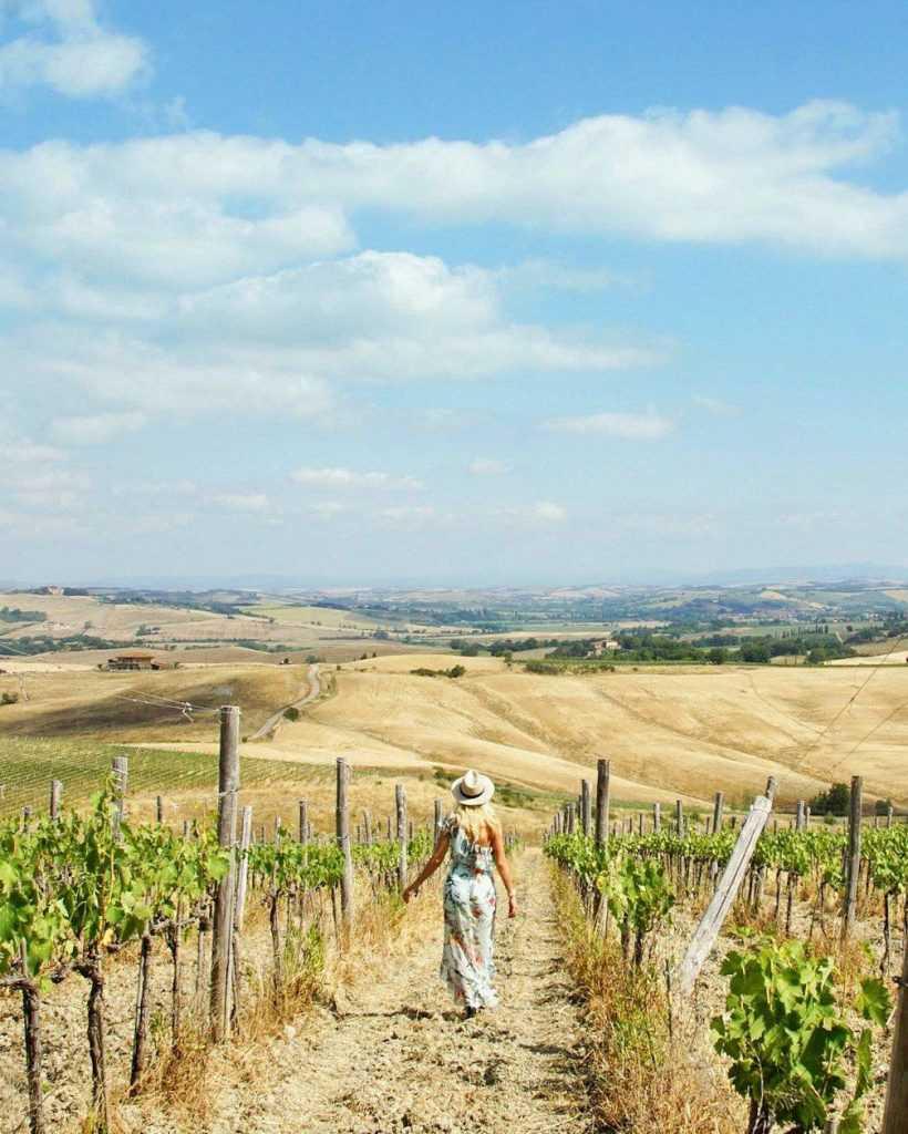 Toskania Pola winorośli