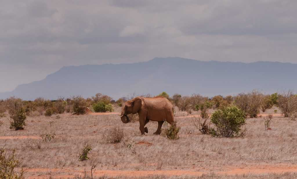 safari 7-1