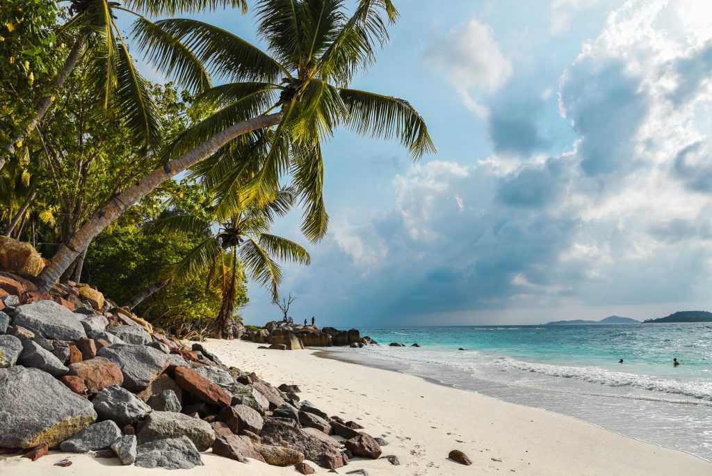 praslin anse kerlan palmy ocean-1