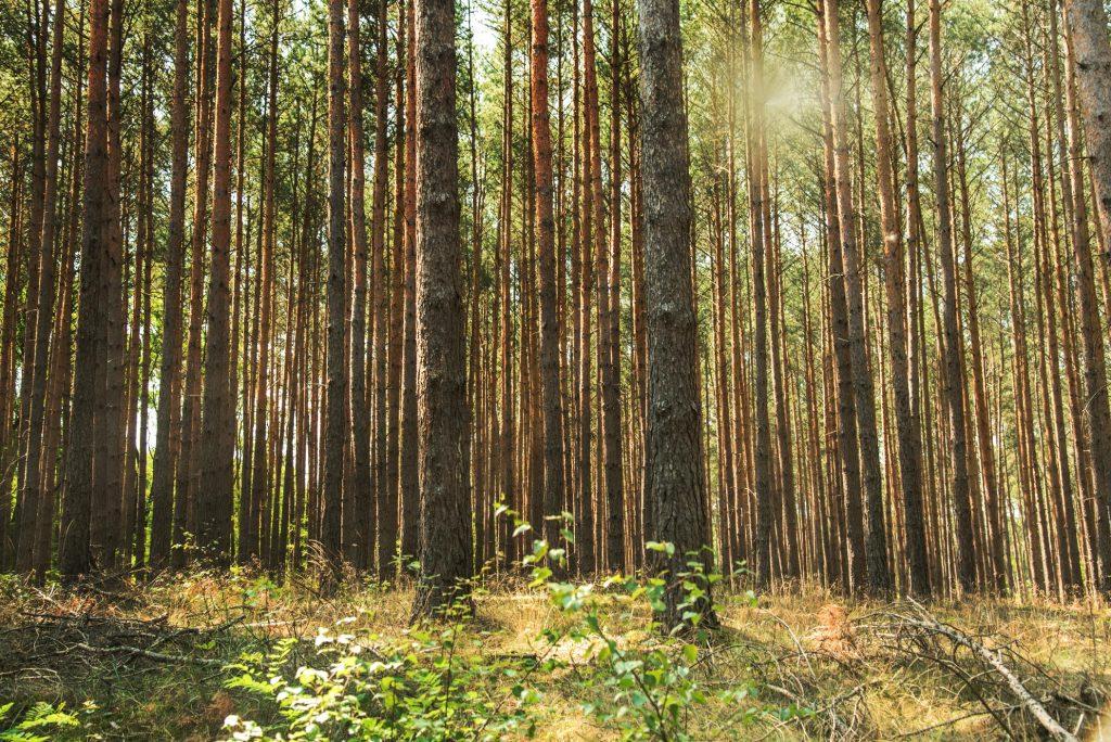 lasy lubuskie2