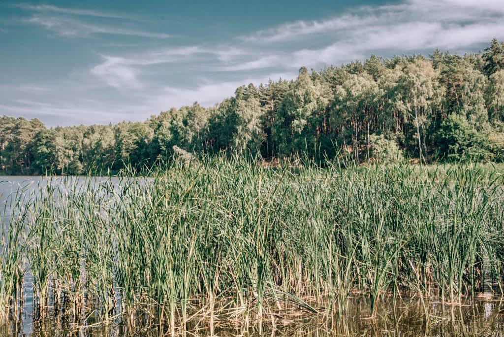 jezioro C